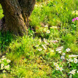 Spring Flowers and Tree — Stockfoto