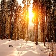 Royalty-Free Stock Photo: Sunset in Winter Forest