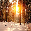Stock Photo: Sunset in Winter Forest