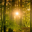 Sun shining through trees — Stock Photo #8894088