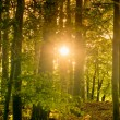 Sun shining through trees — Stock Photo