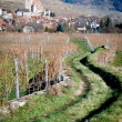 Stock Photo: Path through vineyard