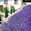House with lavender field — Stock Photo