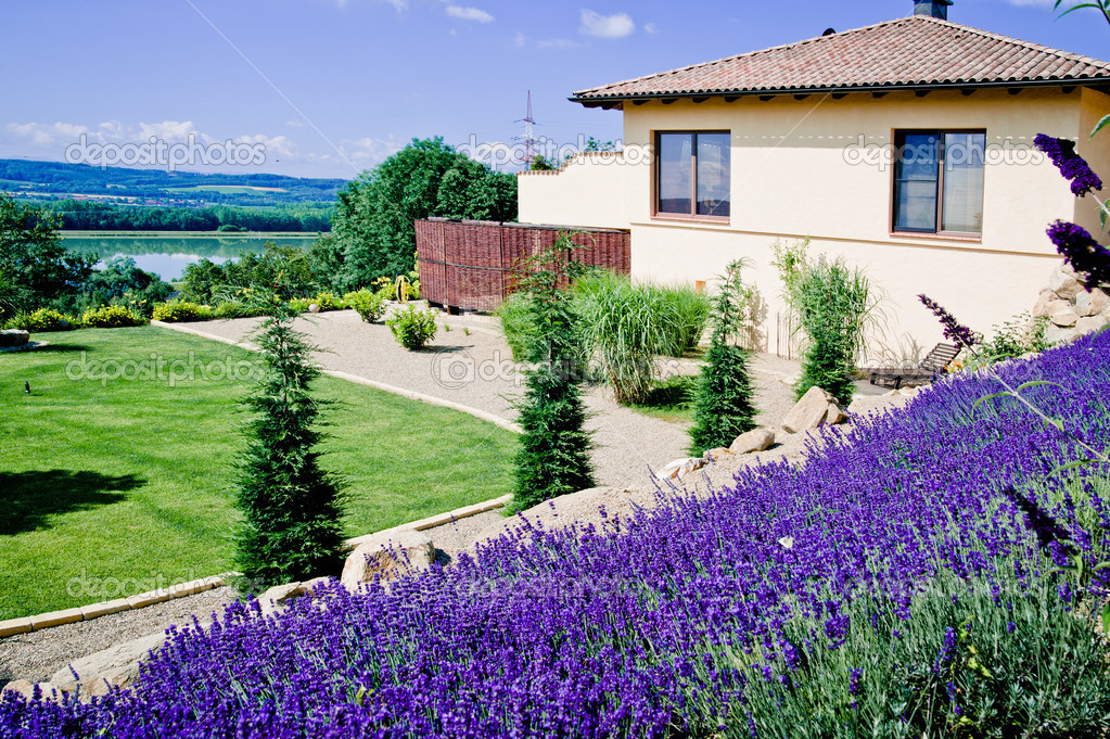 Lavender Field in garden of a luxury mansion — Stock Photo #9061979