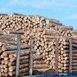 Stock Photo: Stacks of lumber