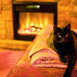 图库照片: Cat by fireplace