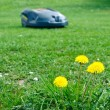 Stock Photo: Robot lawn mower