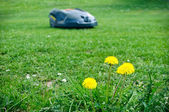 Robot lawn mower — Stock Photo