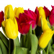 Stockfoto: Red and yellow tulips