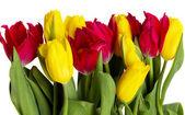 Rode en gele tulpen — Stockfoto