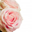 Roses border - Stock Photo