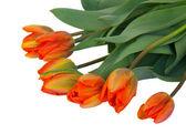 Orange tulips bouquet — Stock Photo