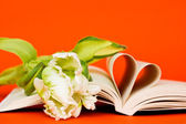 Reading with passion — Stock Photo