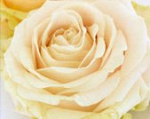 Sfondo rosa — Foto Stock