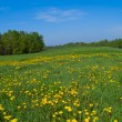 Fresh spring field — Stock Photo