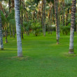 Stock Photo: Cool green tropical forest