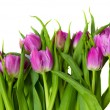 Purple tulips border — Stock Photo #9366460
