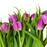 Purple tulips border — Stock Photo