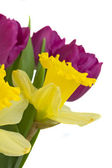 Spring flowers close up — Stock Photo