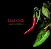 Red chilly with leaves — Stock Photo