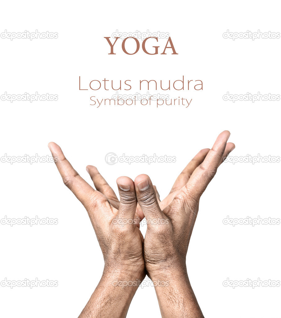 Yoga Lotus Mudra — Stock Photo © Byheaven #8228802. Flame Signs. Love Story Signs. Celebrating Signs. Soft Signs. Description Signs. Equality Signs Of Stroke. Guidance Counselor Signs. Homemade Laundry Signs Of Stroke