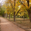 Park lane in Autumn — Stock Photo