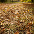 Autumn fading leaves on the ground — Stock Photo