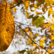 Stock Photo: Fading yellow leaf in sunlight
