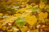 Feuilles d'automne vert et jaune au soleil — Photo