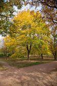Początek jesieni — Zdjęcie stockowe