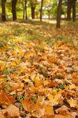 Autumn listowie na ziemi — Zdjęcie stockowe