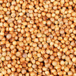 Aromatic coriander seeds as  food background - Zdjęcie stockowe