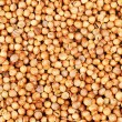 Aromatic coriander seeds as  food background - Stock Photo