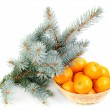 Spruce branch and fresh mandarines over white background — Stock Photo