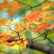 Fall colored leaves - Stock Photo