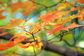 Fall colored leaves — Stock Photo