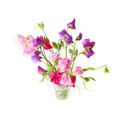 Sweet pea — Stock Photo
