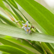 Small wildelife flower — Stockfoto