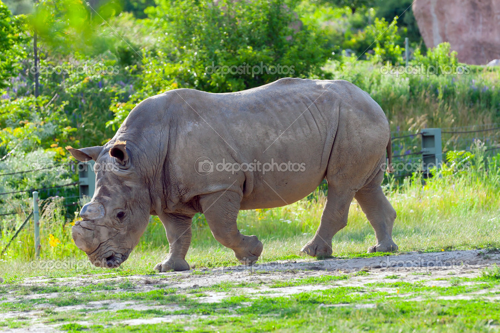 Rhino at the zoo — Stock Photo #8872083