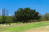 Park och skyskrapor — Stockfoto