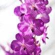 Beauty orchid - Stock Photo