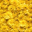 Yellow flowers — Stockfoto #9100706