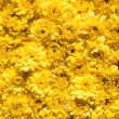 Yellow flowers — Stock Photo #9100706