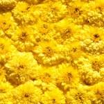 Fresh flowers — Stock Photo #9100708