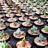 Cactus boerderij — Stockfoto