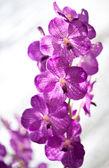 Orchidée beauté — Photo