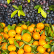 Fresh orange and grape fruit — Stock Photo