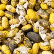 Closeup image of silkworm  spawn — Stock Photo