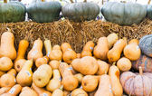 Pumpkins collection on sell — Stock Photo