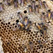 Royalty-Free Stock Photo: Honeycomb